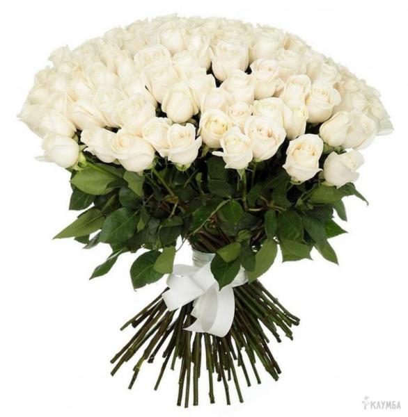 101 roses blanches. 101-white-roses-5IA.jpg