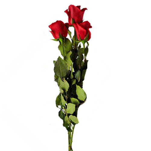 3 Roses rouges. 3_Red_Roses-Pek.jpg