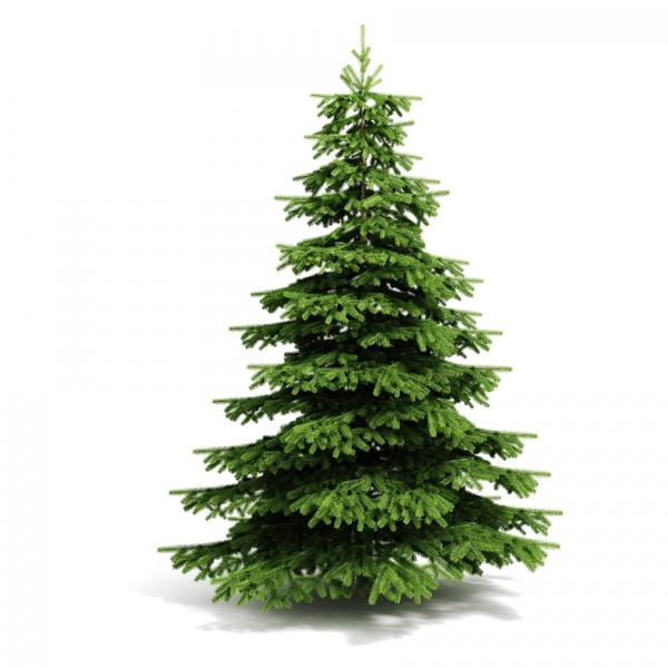Christmas tree. christmas-tree-bS6.jpg
